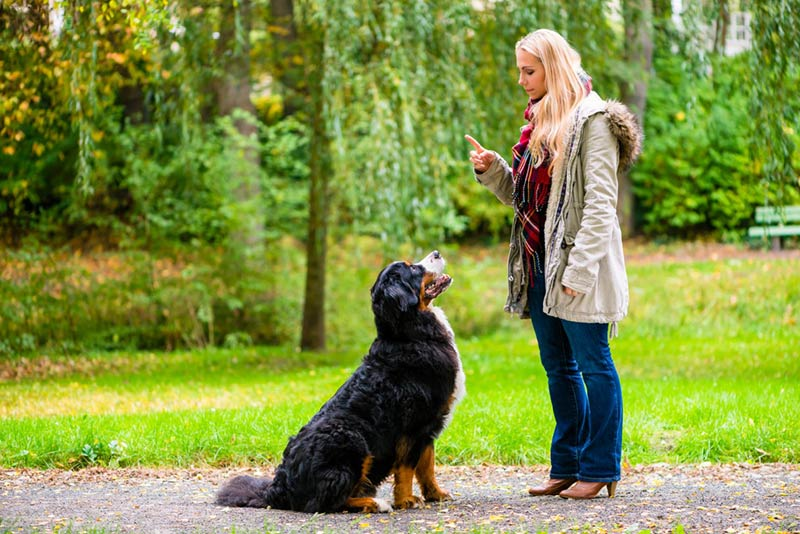 Brain Training For Dogs General